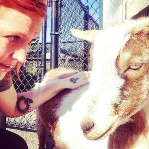 aussa goat