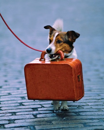dog-with-suitcase