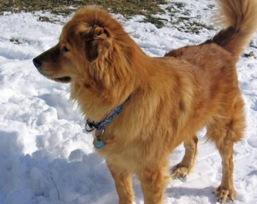 marty-the-chow-mix-3_39088_2009-12-21_w450